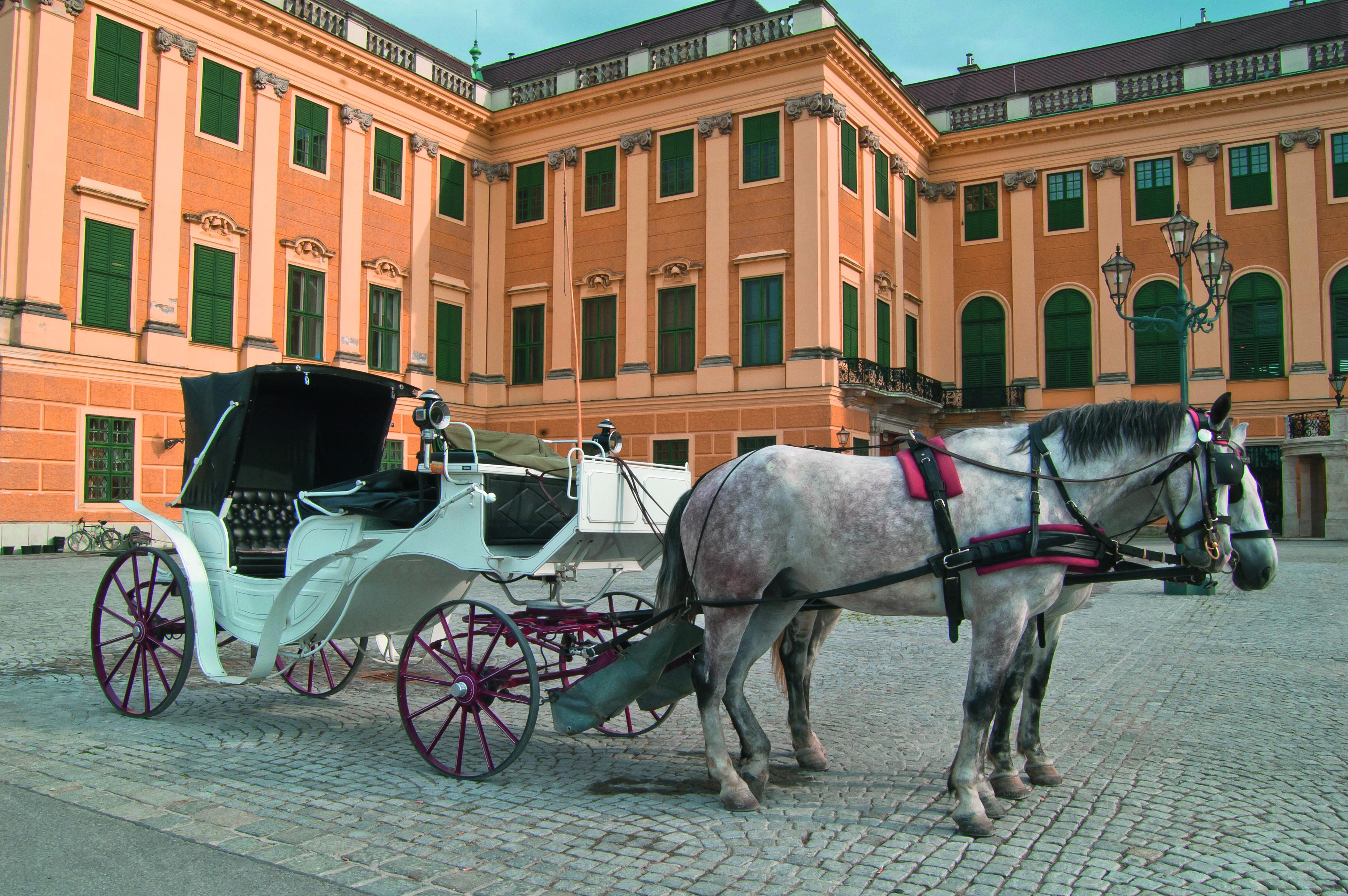 Eine Fiaker Fahrt - ein Muss in Wien