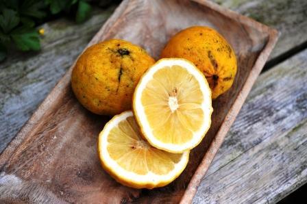 So sieht die Bergamotte Frucht aus