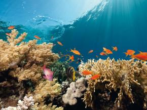 Farbenfrohe-Unterwasserwelt