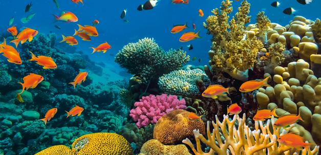 Entdecke diese wunderbare Unterwasserwelt