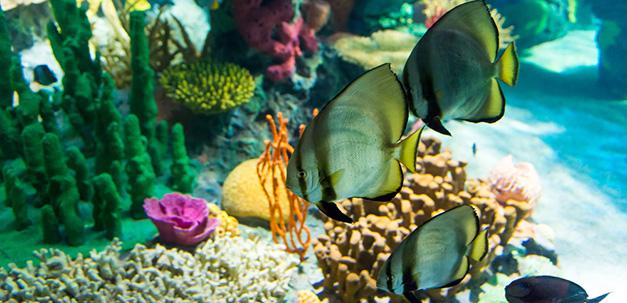 Bunte Fische im Ripleys Aquarium
