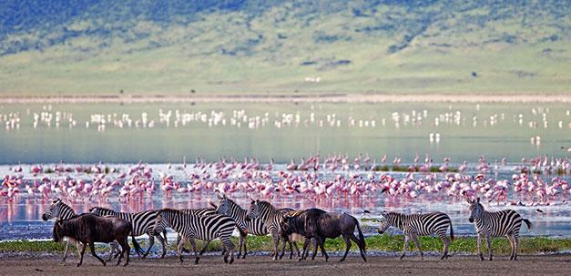 Viele Tiere im Nagorongoro Krater