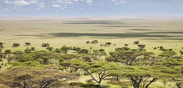 Eine weite Grassavanne der Serengeti