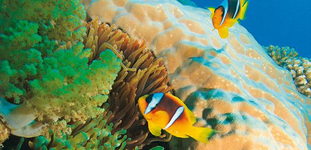 In Sharm el-Sheikh findest du eine traumhafte Unterwasserwelt