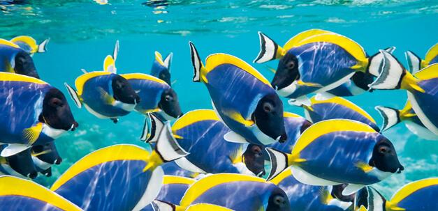 Die traumhafte Unterwasserwelt lässt sich hervorgagend erkunden.