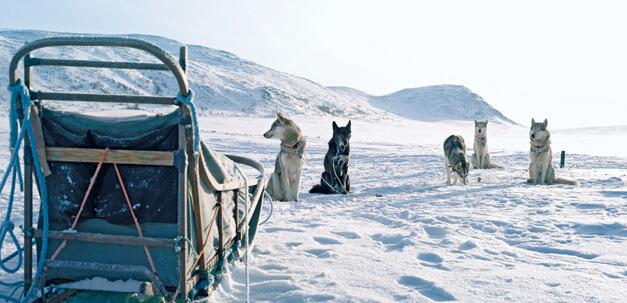 Eine Schlittenfahrt gehört bei jedem Aufenthalt in Lappland dazu