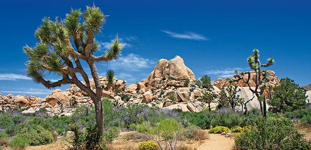 Palm Springs in der Wüste Kaliforniens